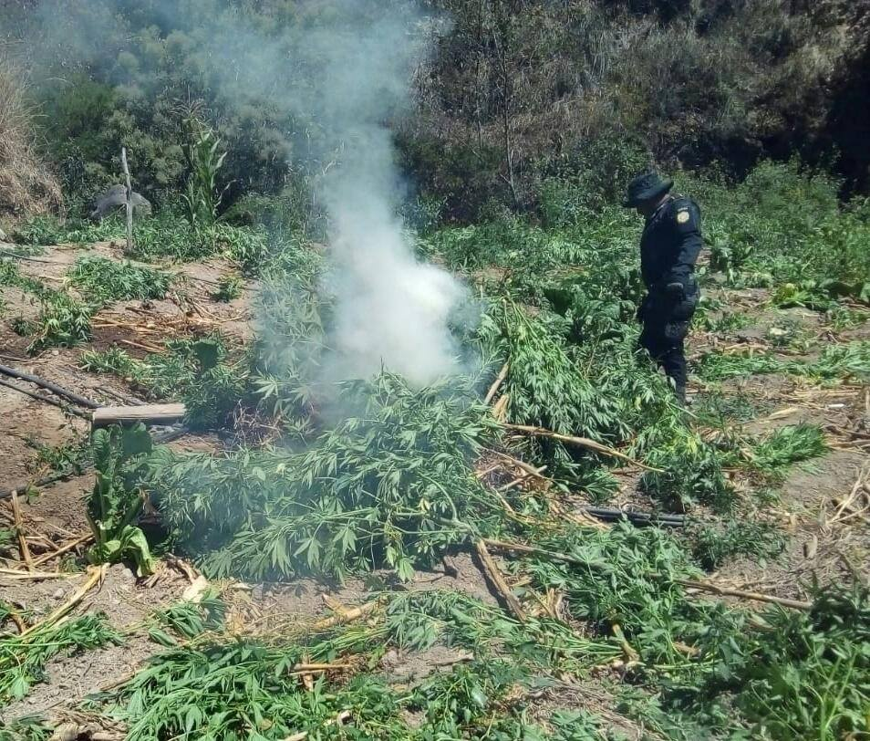 Erradicación de marihuana en Guatemala