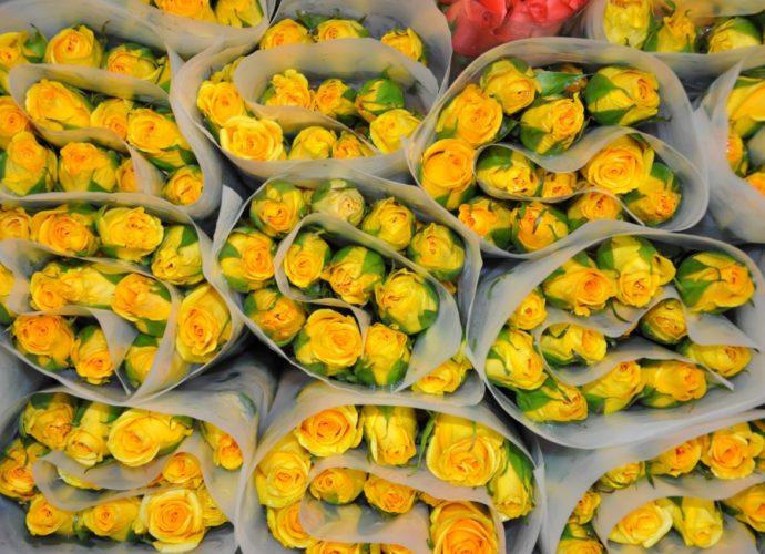 Rosas por el día del cariño