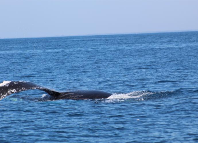 Avistamiento de delfines y ballenas en Guatemala