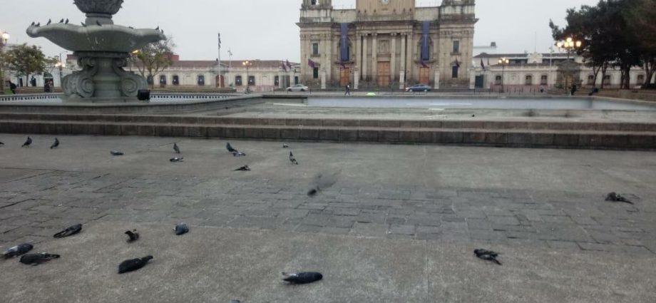 Localizan aves sin vida en Plaza de la Constitución