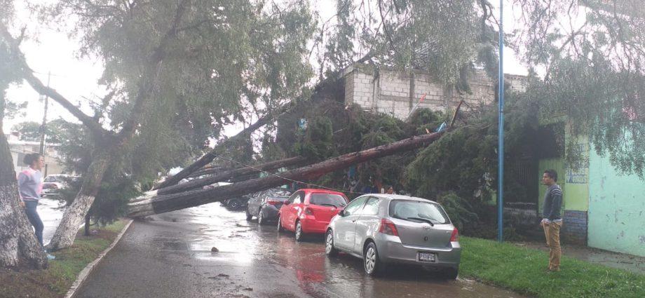 árboles caídos por fuertes lluvias en Quetzaltenango